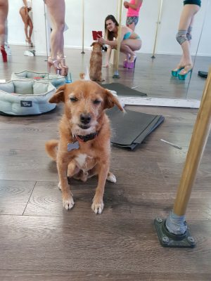 A képen Shimmy kutyája látható, Jeronimo akit posztjaiból már jól ismertünk <3